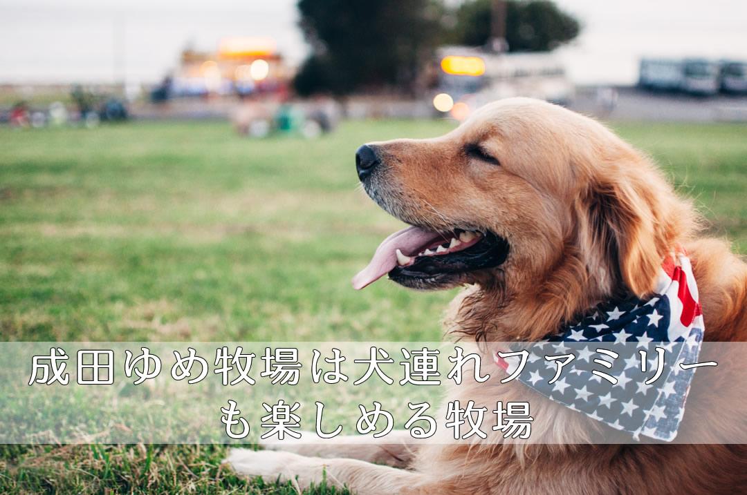 成田ゆめ牧場 犬連れ